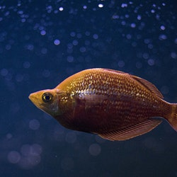 Filiera ittica